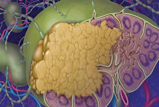 For Lymphoma Patients Receiving R-CHOP, Entecavir More Effective for HBV-Related Hepatitis Prophylax