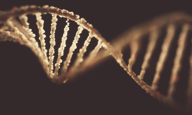 Recent research indicates that there were no significant differences in the genomic landscape of cle