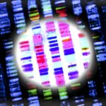 Traditional genetic testing historically included the sequential analysis of single and generally we