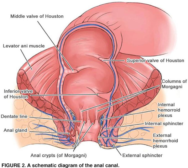 Human Papilloma Virus And Squamous Cell Carcinoma Of The Anus
