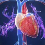 Incidence of Cardiac Events Low With Adjuvant Trastuzumab