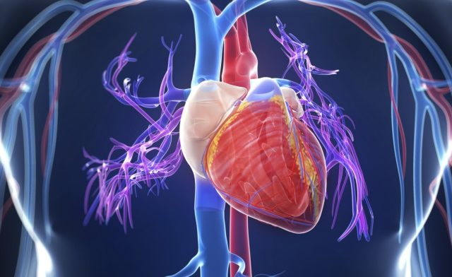 Incidence of Cardiac Events Low With Adjuvant Trastuzumab
