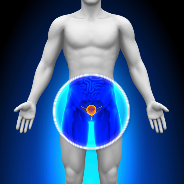 Some researchers are looking at the evidence and urging for a middle ground in prostate cancer scree