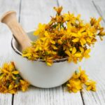 In vivo studies suggest that extracts of St John's wort may have apoptotic effects on cancer cells,