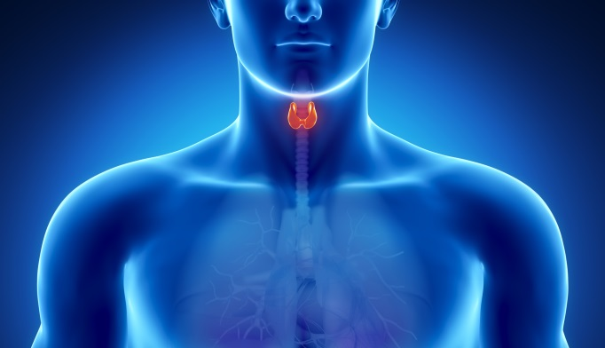 BRAF Mutation May Increase Thyroid Cancer Death