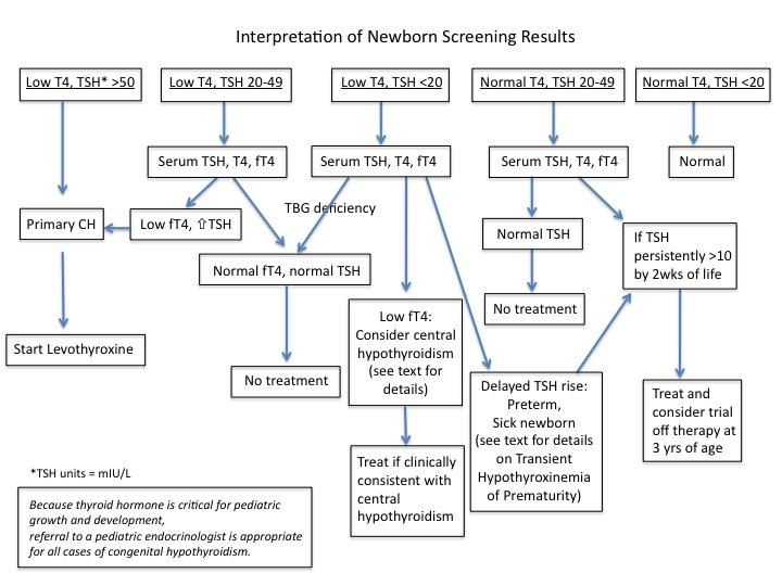 Thyroid Screening Hypothyroidism Cancer Therapy Advisor