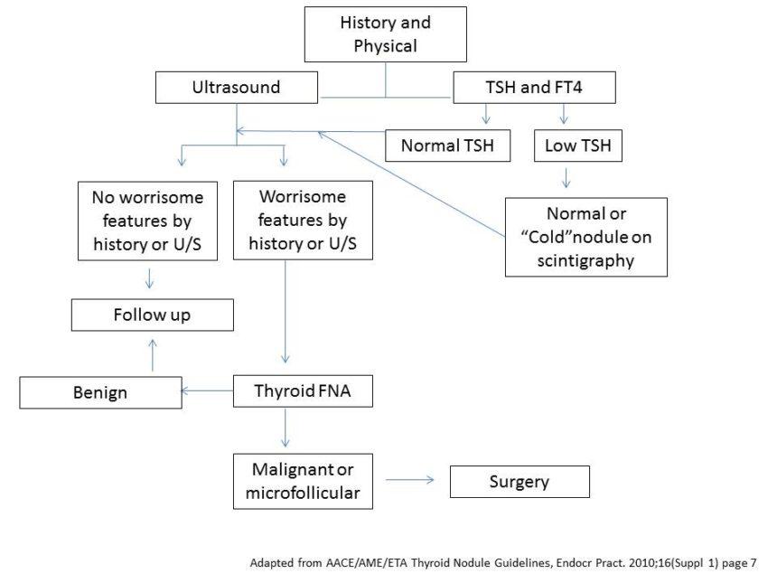 Thyroid Nodules And Thyroid Cancer Cancer Therapy Advisor