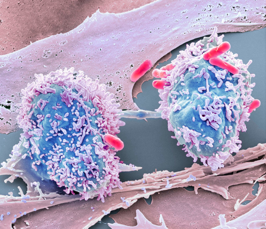 Research shows how cancer cells can act like bacteria and adapt to increase their chances of survival.
