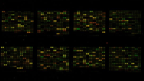 DNA microarray, Gene expression